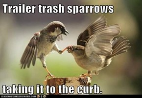 Trailer trash sparrows  taking it to the curb.