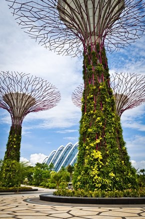 Singapore's Sun-Powered Gardens
