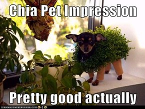Chia Pet Impression  Pretty good actually