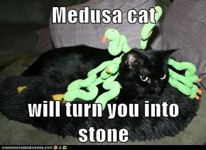 Medusa cat  will turn you into stone