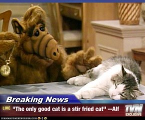 "Breaking News - ""The only good cat is a stir fried cat"" --Alf"