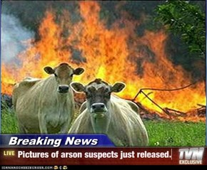 Breaking News - Pictures of arson suspects just released.