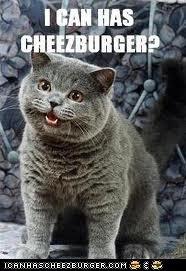 OMG ITS THE CAT!!!!!!!