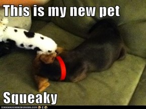 This is my new pet  Squeaky