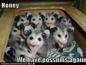 Honey  We have possums again