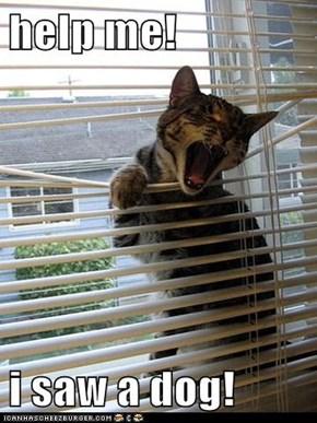help me!  i saw a dog!