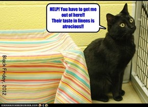 Show Good Taste! Adopt a Black Cat Today!