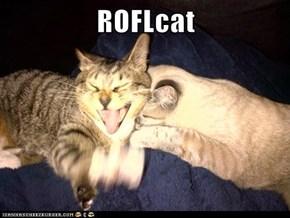 ROFLcat