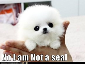 No I am Not a seal