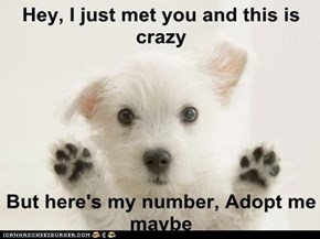 Hey, I just met you and this is crazy  But here's my number, Adopt me maybe
