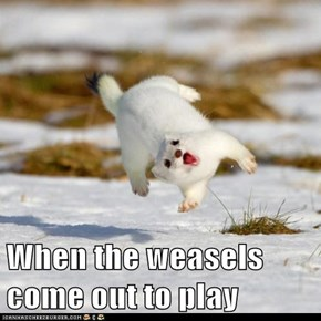 When the weasels come out to play