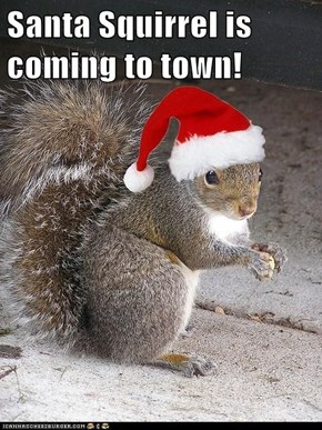 Santa Squirrel is coming to town!