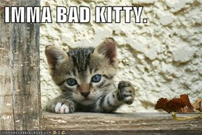 IMMA BAD KITTY.
