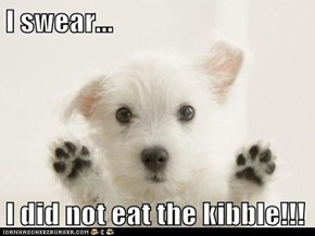 I swear...  I did not eat the kibble!!!
