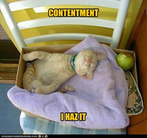 CONTENTMENT..I HAZ IT