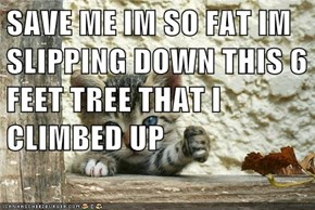 SAVE ME IM SO FAT IM SLIPPING DOWN THIS 6 FEET TREE THAT I CLIMBED UP