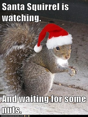 Santa Squirrel is watching.  And waiting for some nuts.