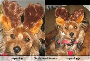 super dog Totally Looks Like super dog jr