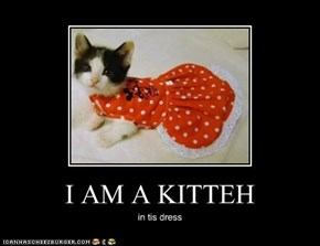 I AM A KITTEH