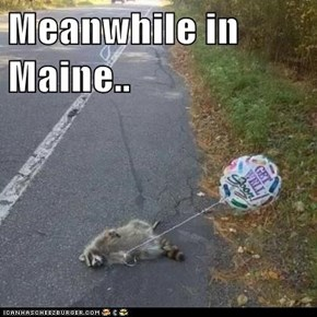 Meanwhile in Maine..