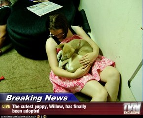 Breaking News - The cutest puppy, Willow, has finally been adopted