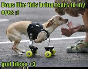 Dogs like this bring tears to my eyes ;)  god bless <3