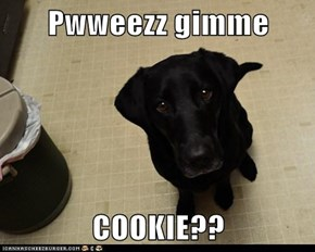 Pwweezz gimme  COOKIE??