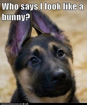 Who says I look like a bunny?