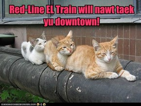 Taking teh EL Train!