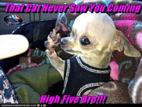 That Cat Never Saw You Coming  High Five Bro!!!