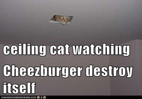 ceiling cat watching Cheezburger destroy itself