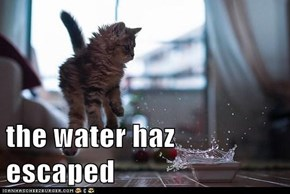 the water haz escaped