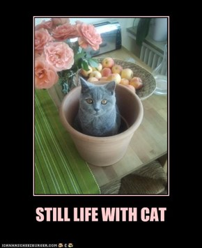STILL LIFE WITH CAT
