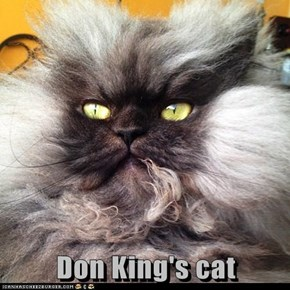Don King's cat
