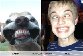 SASHA Totally Looks Like FRED