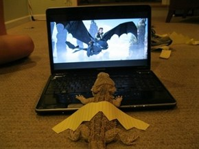 Training Your Bearded Dragon WIN