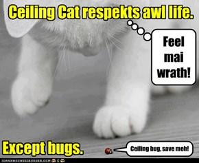 Bugs are prey.