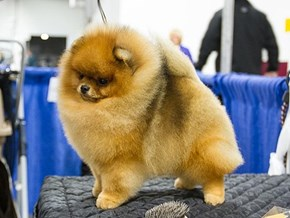 Behind the Scenes at the 2012 National Dog Show