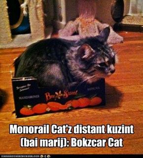 Bokzcar Cat
