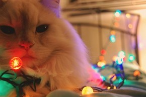 The 25 Days of Catmas: Yeah, I Unstrung All of Your Lights.  What're Ya Gonna Do About It?