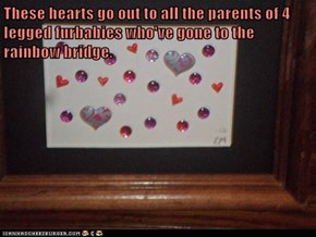 These hearts go out to all the parents of 4 legged furbabies who've gone to the rainbow bridge.
