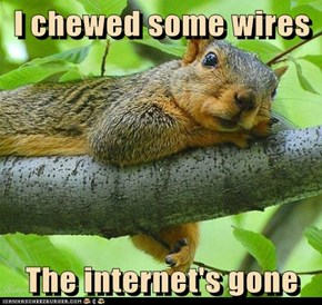 I chewed some wires  The internet's gone