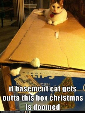 if basement cat gets outta this box christmas is doomed