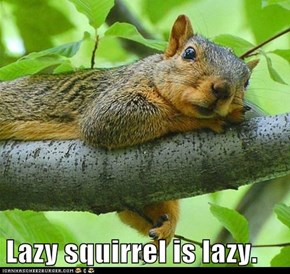 Lazy squirrel is lazy.