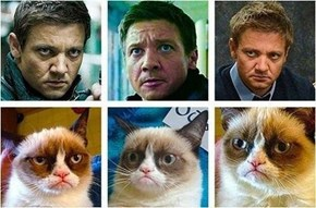 Doppleganger of the Day: Jeremy Renner & Grumpy Cat
