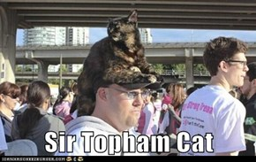 Sir Topham Cat