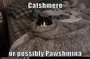 Catshmere  or possibly Pawshmina