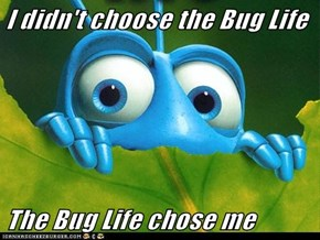 I didn't choose the Bug Life  The Bug Life chose me