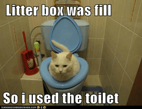 Litter box was fill  So i used the toilet