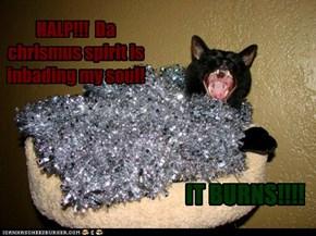 Poor Basement Cat!